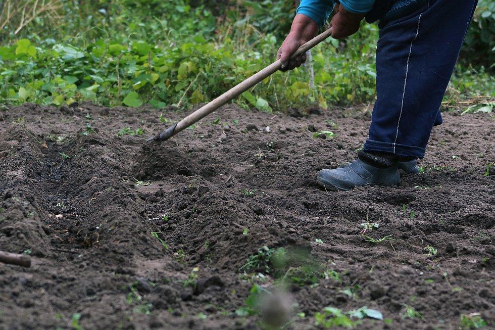 Pokud jste si záhon poryli už na podzim, na jaře jej znovu upravte. Někdy stačí zeminu nakypřit a zeminu uhrábnout.