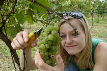 Vinobraní na Velehradě