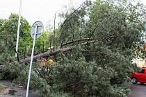 Čtvrteční prudká bouřka lámala stromy.
