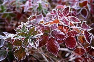 Rostliny kvetoucí v zimě