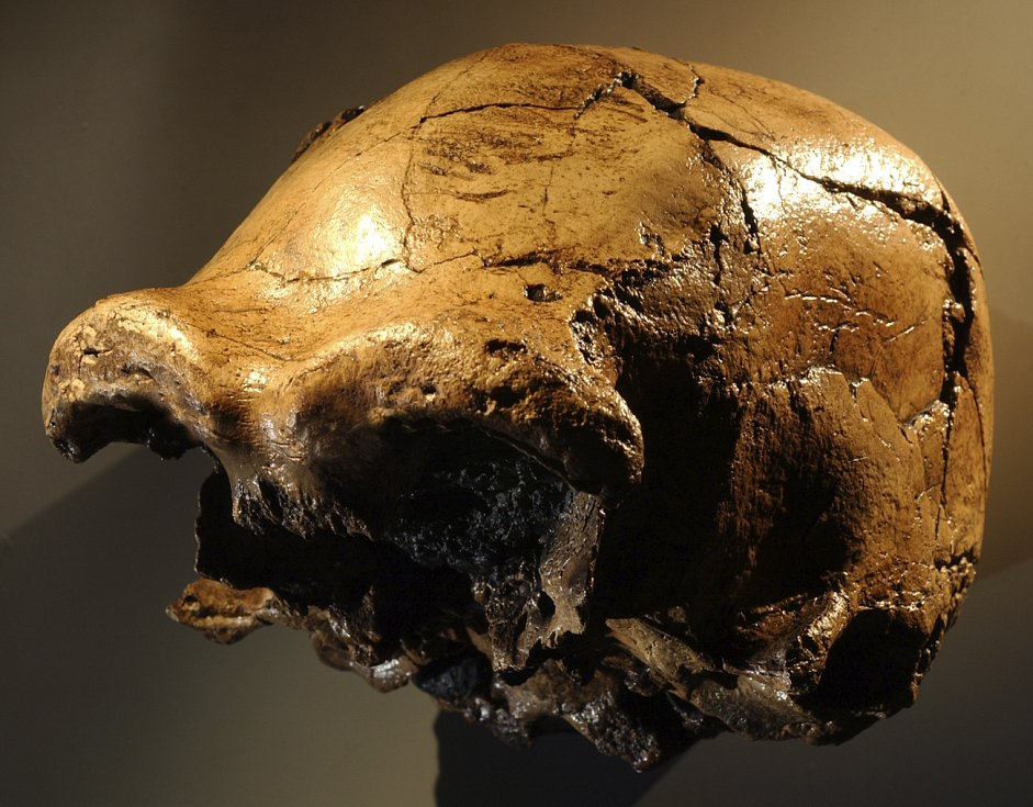 Lebka Homo erectus nalezená v údolí řeky Awaš v Etiopii.