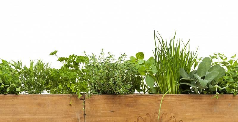 Bylinky pěstované v dřevěné krabici