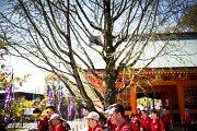 První japonské kroky pardubických Bonifantes