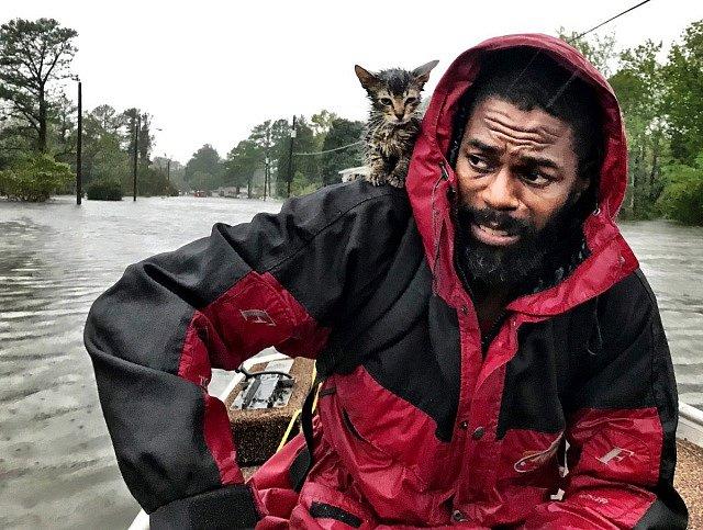 Řáděním tropické bouře Florence trpí i zvířata.