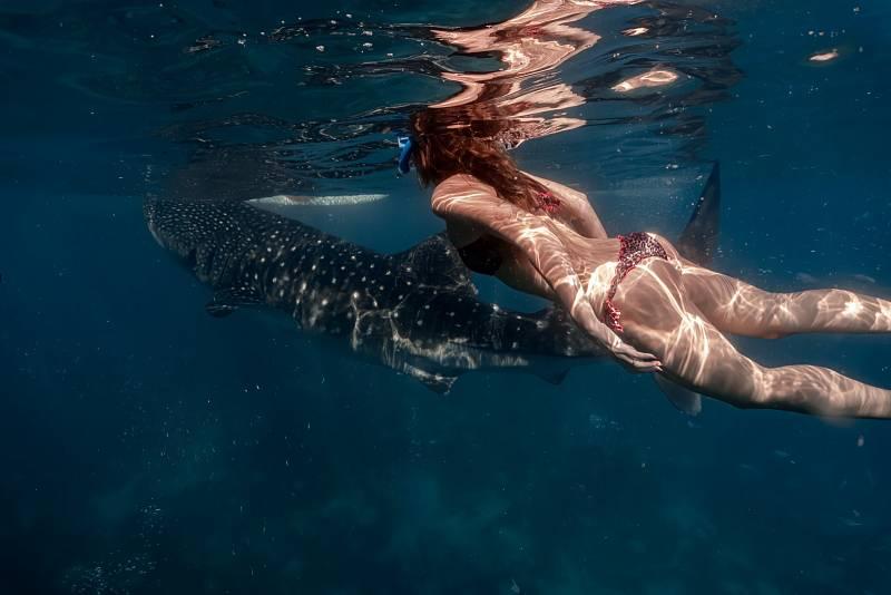 Biotop žraloků narušuje také stále populárnější potápění s těmito majestátními tvory. V Austrálii jsou proto cestovní kanceláře, které ho nabízejí, regulovány.