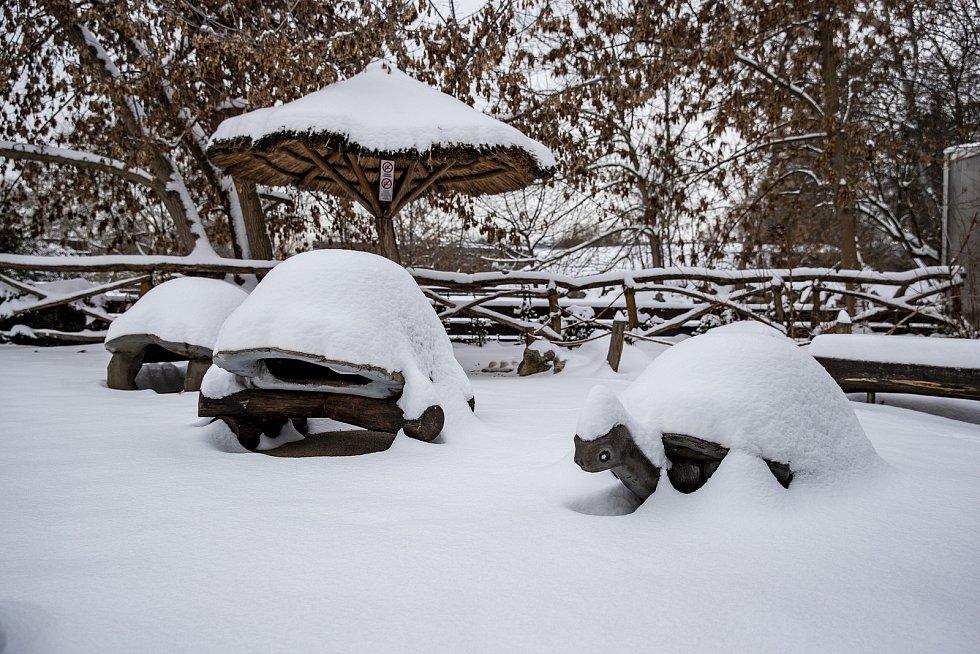 Zapadané želví prolézačky mají od sněhu ještě větší krunýř.