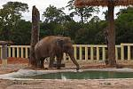 Slon Kaavan ve svém novém domově