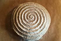 Chlebové těsto vyklopené z ošatky.
