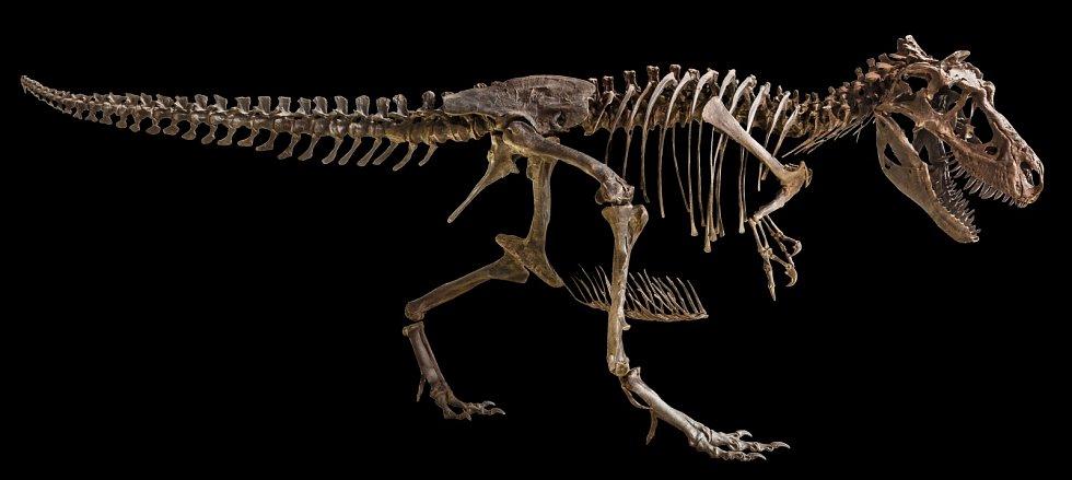 Paleontologové v Argentině objevili pozůstatky dosud neznámého dinosaura.