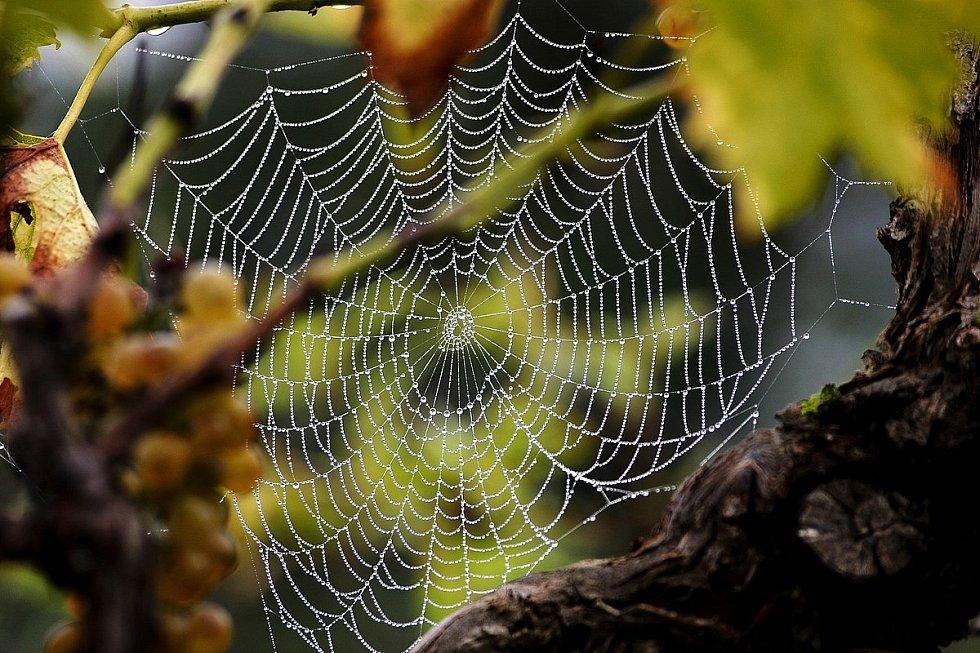 Když různým vláknům pavučiny přidělíte zvukové frekvence, pavučina se rozezní