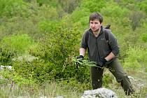 Dobrovolníci pomáhali ochráncům přírody na Pálavě likvidovat invazní boryt barvířský.