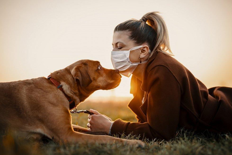 Speciálně vycvičený pes pomocí přičichnutí k testovanému materiálu zjistí, zda je daný člověk pozitivní, či negativní