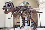 Kostra tyranosaura v muzeu v americkém Chicagu.