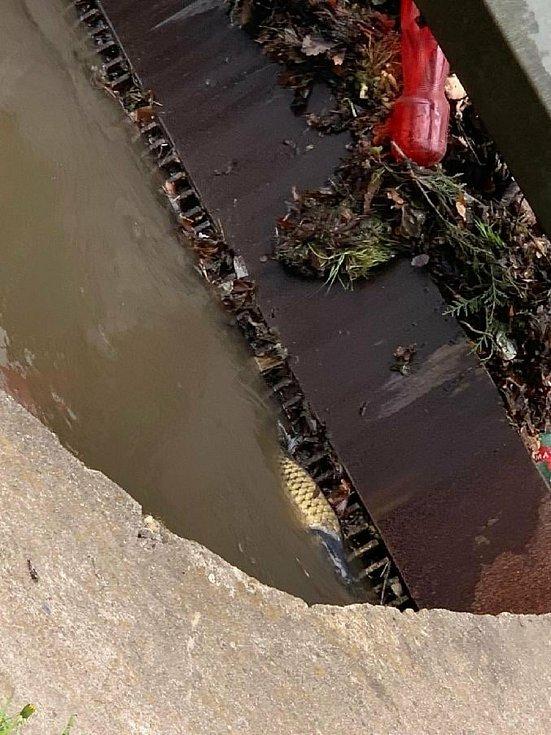 Řeka Bílina je silně znečištěná.