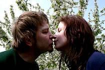 Už jste se dnes políbili pod rozkvetlým stromem?