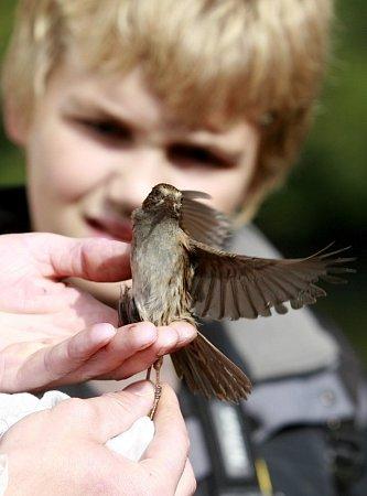 Na řadě vzácných lokalit a hojných ptačích koloniích vjižních Čechách se konalo po vedením ornitologů pozorování ptactva, ukázky kroužkování a odchytu. Na snímku pozorovatelé uDívčic a Zbudova na Českobudějovicku.