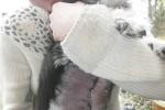 Čtyřnohá pacientka Ťapka. Je po operaci nádoru mléčné žlázy, kterou provedl hodný pan doktor na plzeňské veterinární klinice. Nejdříve byla Ťapinka bázlivá, ale po zákroku už vše zvládla dobře, našla si i místo na mazlení.