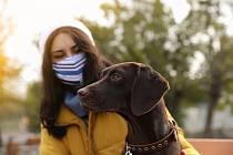 Přestože detekování covidu psy zatím není legislativně postavené na stejnou úroveň jako PCR či antigenní testy, podle výzkumníků za metodami nijak nezaostává.