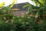 Resort Zuri má charakter tropické bujné zahrady