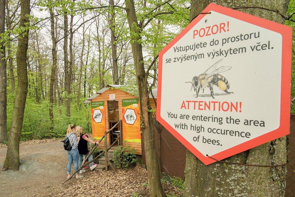 Jarní péče o včelstva v expozici brněnské zoo. Augustin Uváčik přidával do úlů nástavky.