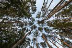 Les, stromy - ilustrační foto