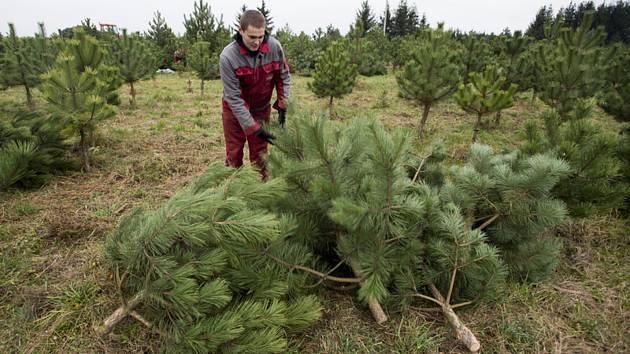 Stromky pro vánoční trh