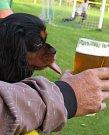 Na fotbale v Rovni, když měl Pepův pes žízeň jako on...