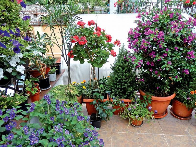 Přeměňte si terasu na soukromou botanickou zahradu.