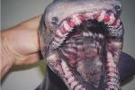 Žralok límcový