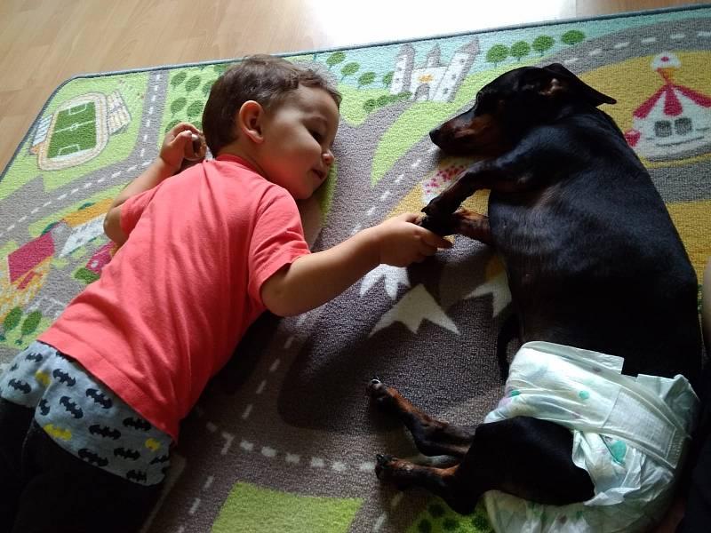 Nás šestiletý Barny po operaci vyhreznute ploténky a jeho domácí oseteovatel. Právě odpočívají po cvičení aby se znovu rozchodil.