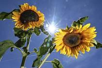 Letní počasí, slunce, slunečnice - ilustrační foto