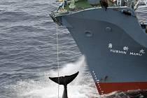 Japonská loď vytahuje na palubu velrybu ulovenou v antarktických vodách.