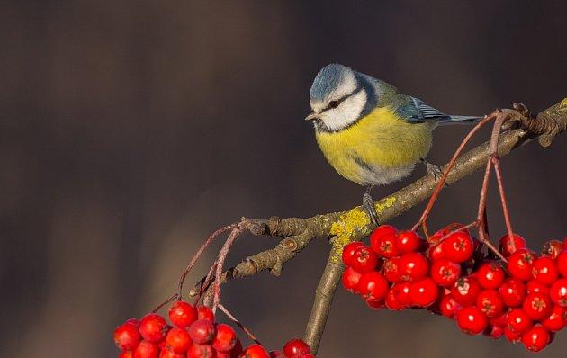 Krmení ptáků vzimě