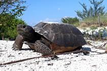 Floridský úřad na ochranu přírody požádal občany, aby přestali přebarvovat krunýře místních želv.