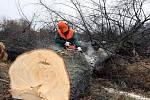 Kácení stromů za pardubickým OBI marketem odnese 148 stromů. Mělo by zde stát další obchodní centrum, stavět se ale v brzké době nebude