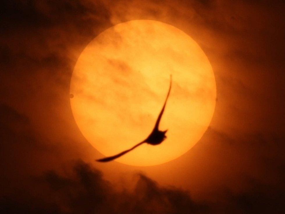 Přechod Venuše přes Slunce
