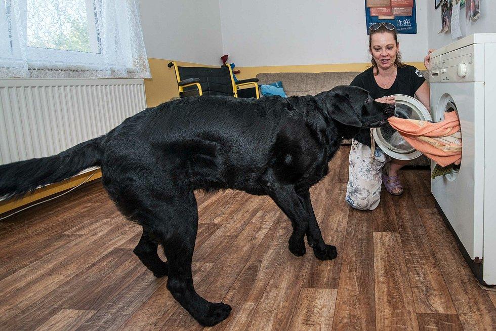 Cvičitelka Renata Krejčová vyučuje budoucí psí asistenty všem domácím úkonům, od otvírání dveří, podávání předmětů spadlých na zem až po vyndávaní prádla z pračky.