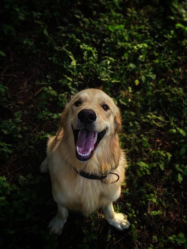 Vhodné je začít psa už od štěněte zvykat na čištění zubů speciálním gumovým kartáčkem za pomoci speciální psí zubní pasty, která navíc psům chutná.