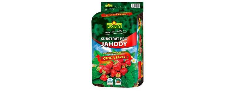 """Jahody lze pěstovat dokonce přímo vobalu od substrátu, který se prodává ve čtyřicetilitrových pytlích """"Otoč asázej""""."""