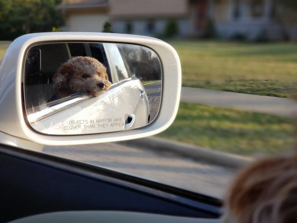 Pes v autě - Ilustrační foto