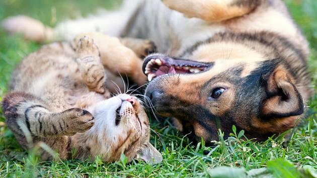 Mezidruhové přátelství