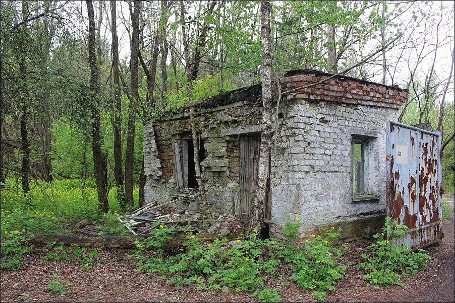 V uzavřené zóně se dnes daří fauně, budovy postupně pohltila příroda