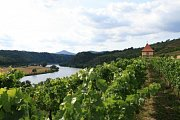 vinice u Žernosek