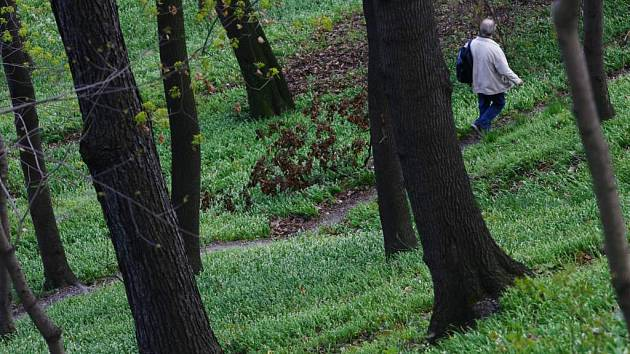 Chodec na procházce v lese.
