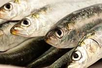 Ryby bychom si měli dopřát alespoň dvakrát týdně. Ilustrační foto