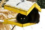 Při umísťování krmítka dbejte na to, aby se k ptačímu stolování nemohla připojit i kočka, kuna nebo lasička.