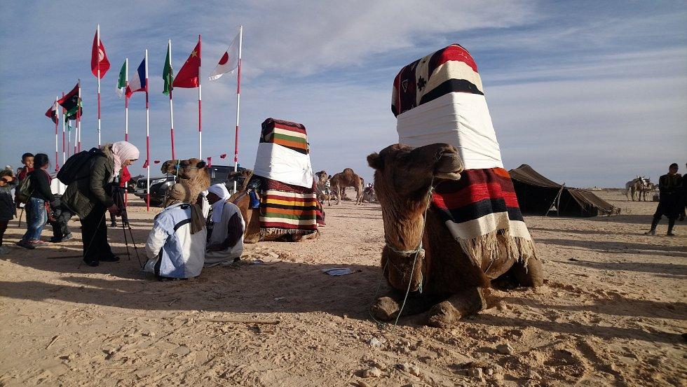 Tradiční velbloudi určené pro nevěsty. Některé svatby se ve městech jižního Tuniska bez těchto dávných korábů pouště neobejdou.