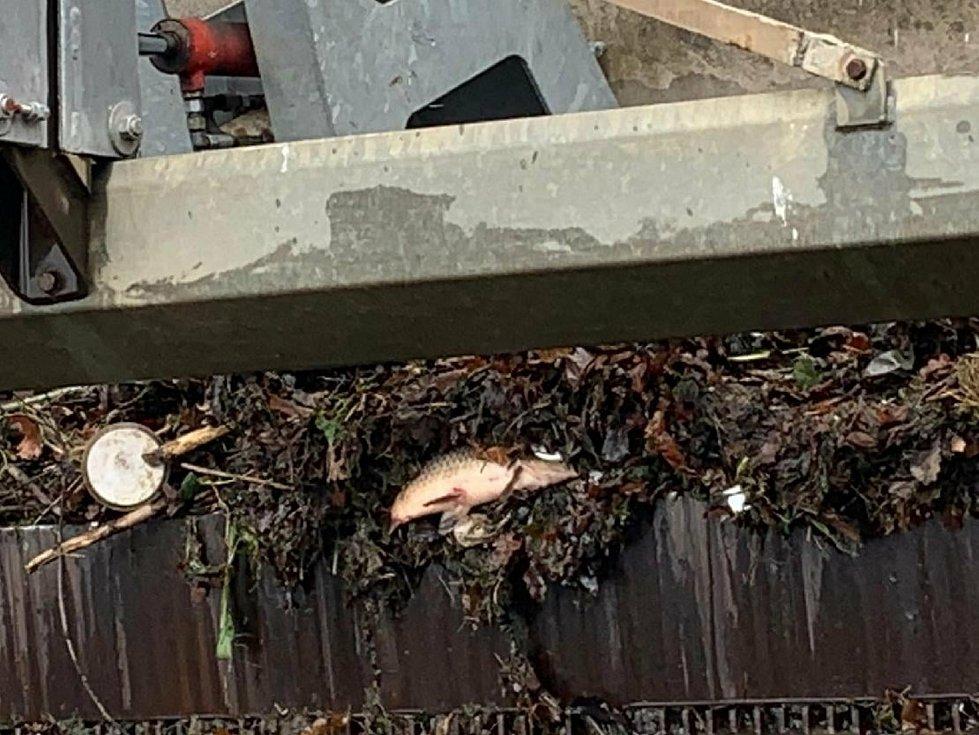 Uhynulo několik druhů ryb.