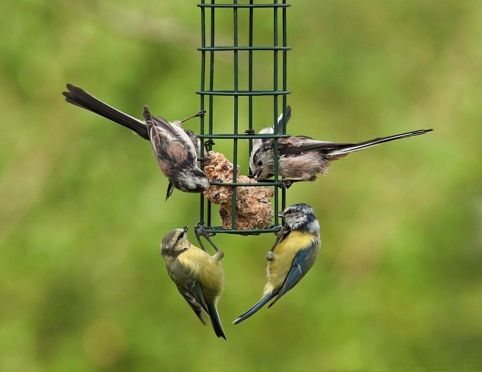 Radost všem návštěvníků a obyvatelům komunitních zahrad udělají krmítka a pítka pro ptáky.
