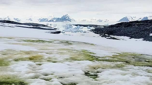 """Některé oblasti Antarktidy pokryl """"zelený sníh"""""""